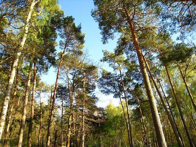 Parco San Rossore Pisa: forest bathing antistress!